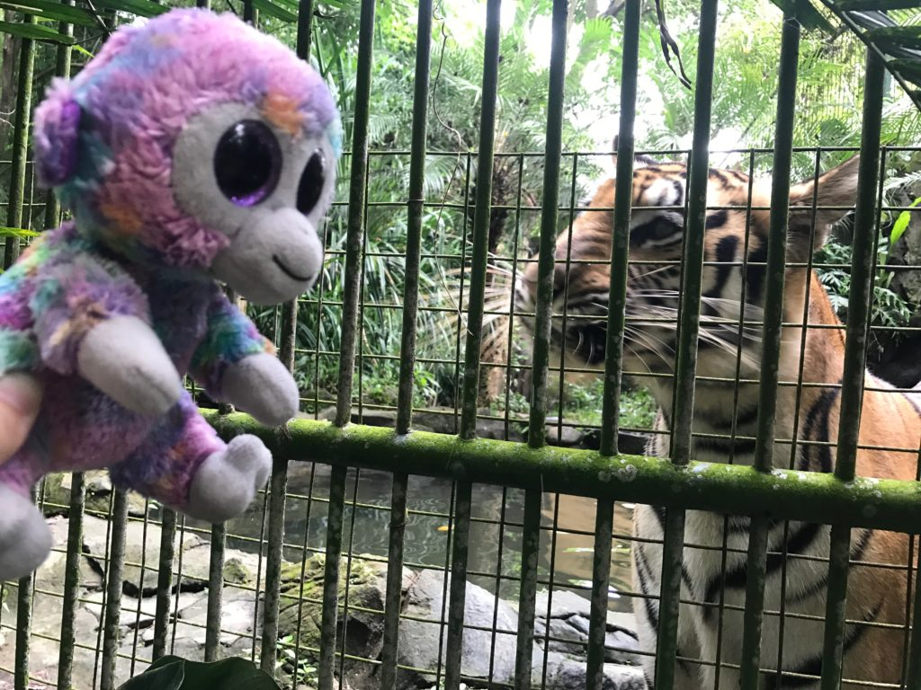 Bali Zoo Minky S Day Out